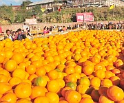11th State Level Orange Festival 2014 at Tamenglong #2 :: Gallery