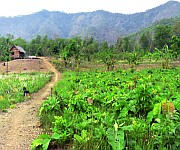 Namlee Village Kasom Khullen, Ukhrul District :: Panorama 360 View