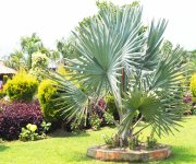 Chingarel Biodiversity Park #2 :: Gallery