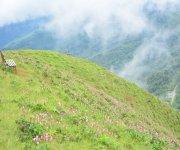 Singcha Wuya Won (pink flower) at Shingcha village, Kamjong district #1 :: Gallery