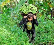 Lafoi Shamda haptuna puthorkpa : Luwanglong Khullen , Tamenglong carrying Banana basket #2 :: Gallery