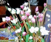 Garlic Festival : District Level Shuri Kaso Phanat at Tolloi, Ukhrul #1 :: Gallery