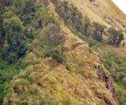 Climbing the Shirui Hills  at Ukhrul #3 :: Gallery